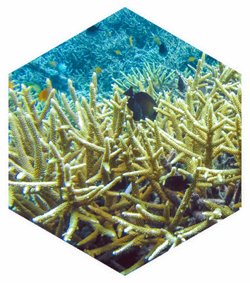Marine Biologist Carrers